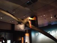 Los largatos alados: una muestra especial en el Museo de Historia Natural en New York