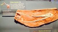 Restos de pterosaurio encontrado en la provincia de San Luis, Argentina.