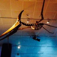 Fósiles revelan la diversidad de tamaño de los pterosaurios.